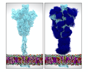 protein_with_glycans_ieee_72dpi